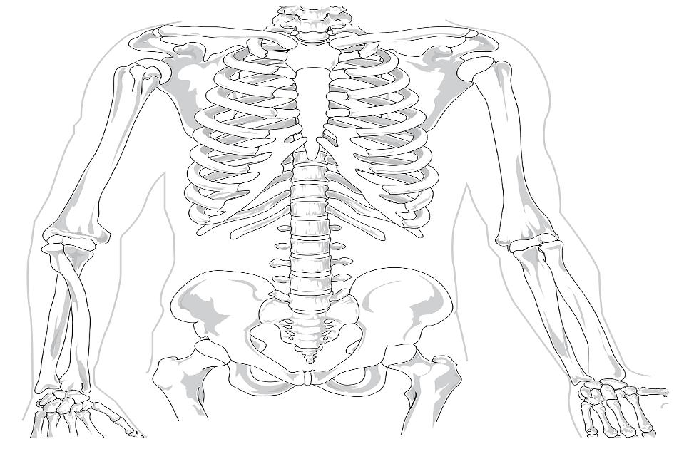 Coloana vertebrala si reteaua de distributie